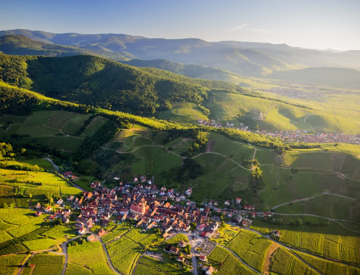 Vue sur Niedemorschwihr - Route des Vins d'Alsace