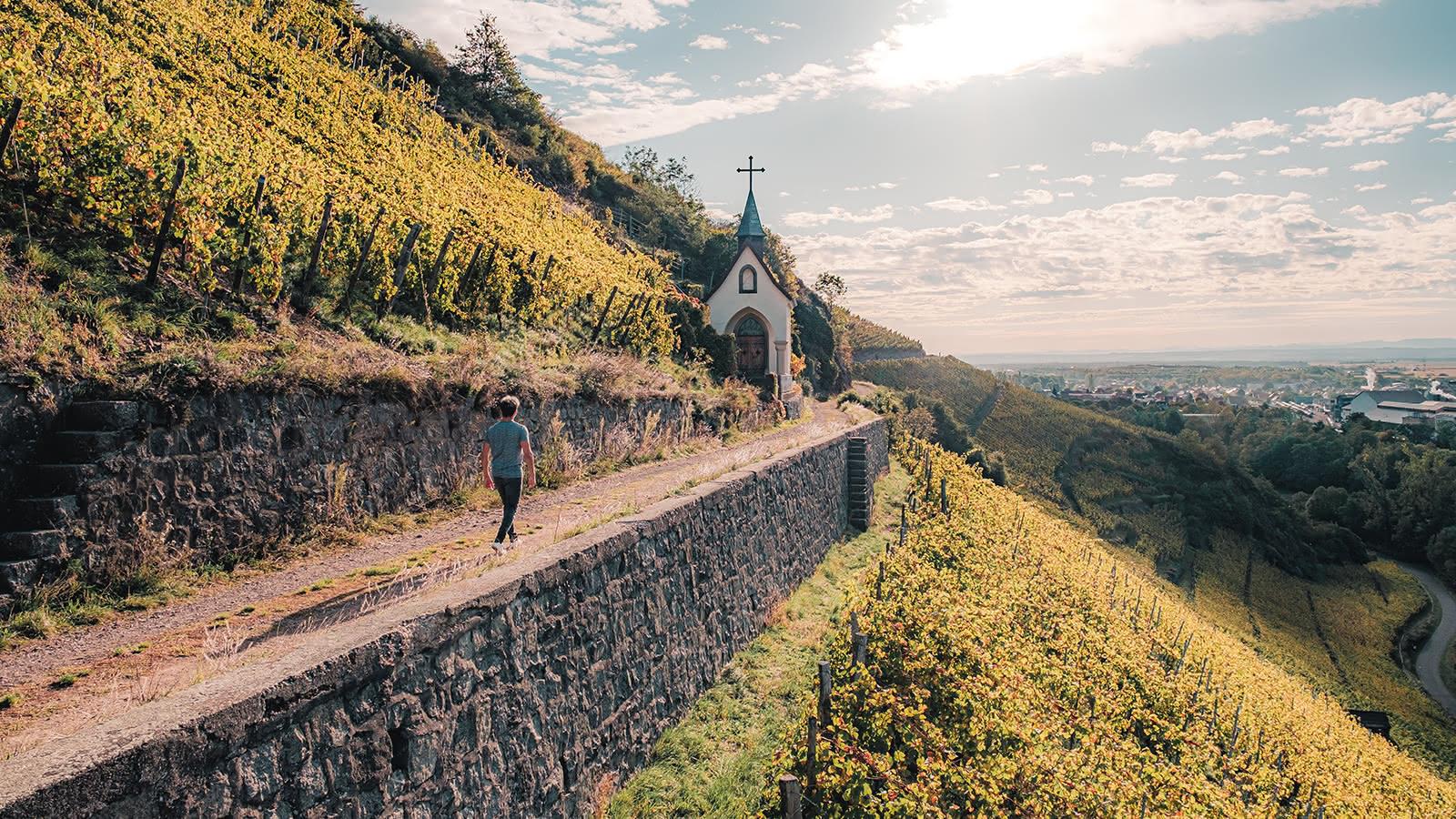 Sentier viticole du Rangen