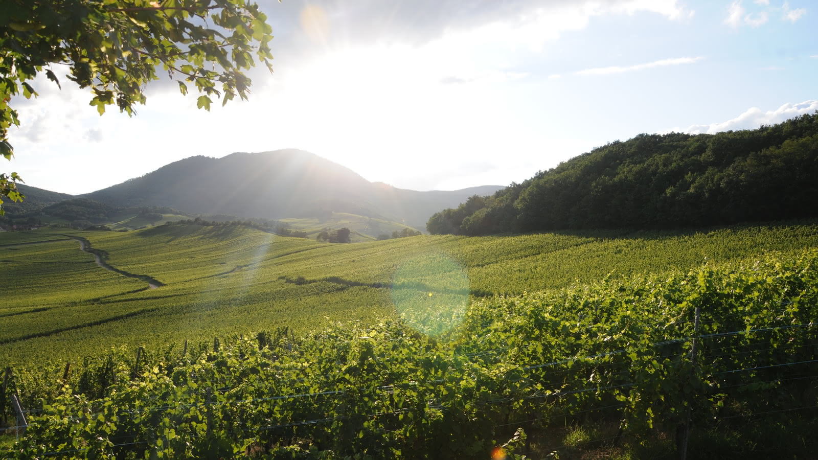 Dîner au cœur du vignoble