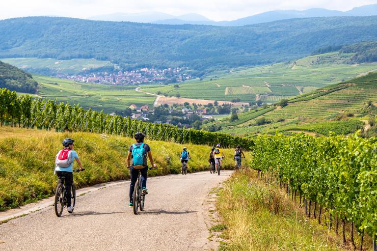 Velo - Vignes - Domaine Rieflé