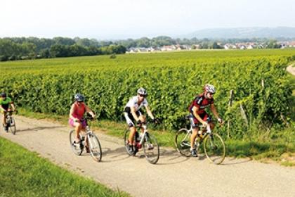Cyclistes à vélo vignoble